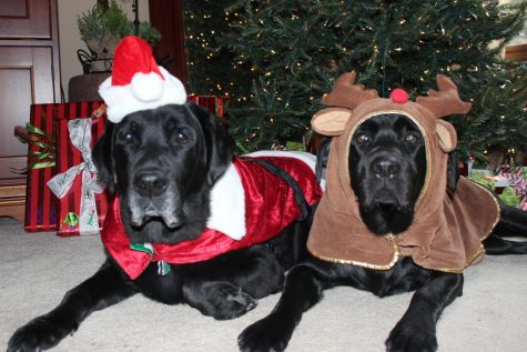 Underneath the Christmas tree, Caesar (retired) and Jack wearing festive costumes.